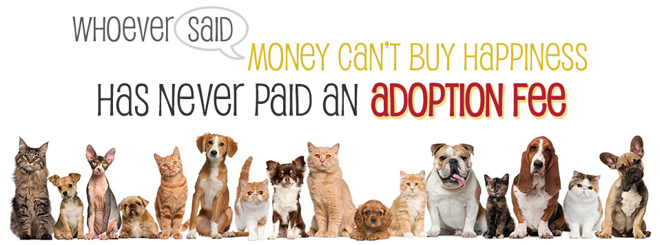 Adopt A Dog Missouri City
